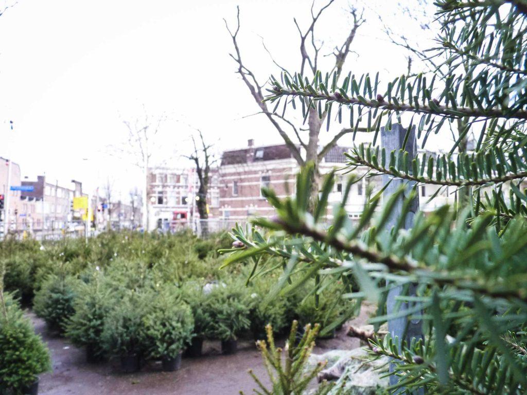 Utrecht verbindt kerstboom